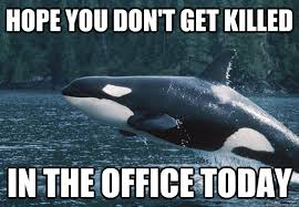 Whale Meme - compassionate killer whale memes quickmeme