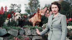 queen s dogs the queen u0027s favourite animals all 4