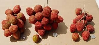 lychee fruit inside lychee varieties