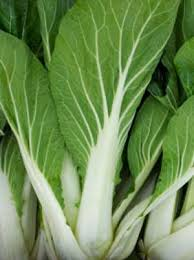 cabbage china cabbage grow guide