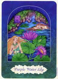 Purple Lily Flower Purple Water Lily Flower Essence Purple Water Lily Flower Remedy
