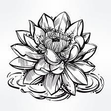 sketches for lily pad sketch www sketchesxo com