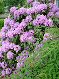 native plants in virginia lisa earthgirl u2013 gardening tips and helpful advice historical plants