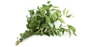 Curry Leaf Plant Diseases - add kadi patta or curry leaves to your diet to fight diabetes