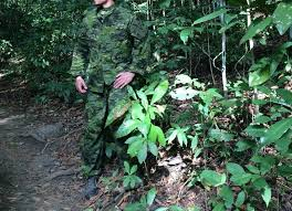 Color Blind Camouflage Test Multicam Tropic Military Camouflage Effectiveness Pinterest