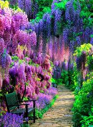 Japanese Flowers Pictures - best 25 wisteria ideas only on pinterest flower vines climbing