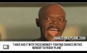 Snakes On A Plane Meme - snakes on a plane director wants next film to have equally