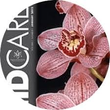 orchid pictures orchid care
