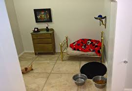 this woman built her dog a bedroom under the stairs and the
