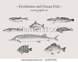 forest animals drawings set on grey stock vector 643850923