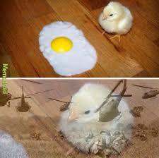 Egg Meme - the best egg memes memedroid