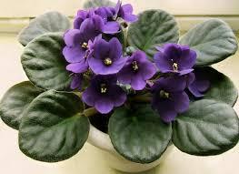 Indoor Plants Low Light Hgtv indoor plants low light hgtv hommum