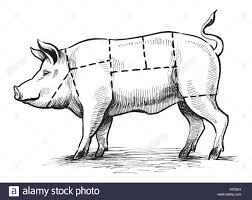 butchers black and white stock photos images alamy butcher s chart stock image