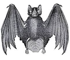 halloween bat template forween decorations coloring pages to
