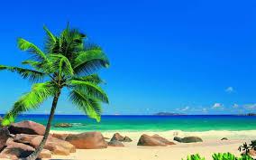 beach landscape with palm tree fleagorcom