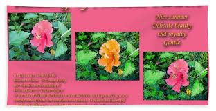 meaning of hibiscus flowers sheet for sale by william braddock