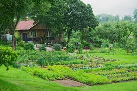 the basics of planning your vegetable garden a cultivated nest