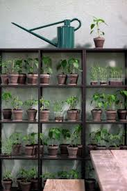 121 best urban jungle images on pinterest plants indoor plants