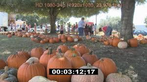 Halloween Pumpkin Origin Halloween Pumpkin Patch Volunteers Stock Footage Best Shot