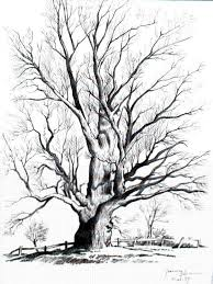 the 25 best tree drawings ideas on pinterest trees drawing