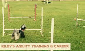 Backyard Agility Course Agility Archives Oh My Shih Tzu