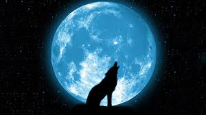 related pictures wolf howling at the moon meaning chainimage