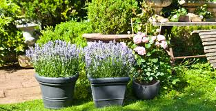 idee amenagement jardin devant maison jardin idée de décoration pour votre jardin westwing