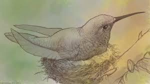 hummingbird sketch by pixelfish on deviantart