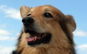 boxer dog upset stomach dog vomiting bile dog u0027s upset stomach