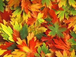 thanksgiving themed wallpaper fall wallpaper with leaves 43 free fall with leaves wallpapers