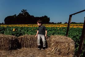 adventure day grinter farms sunflower field kansas city