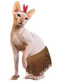 Cat Halloween Costumes Cats Release Halloweencostumes Unveils
