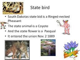 state bird of south dakota south dakota michael brown mrs whitaker south dakota s nickname