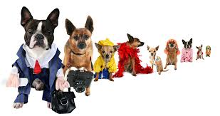 Halloween Costumes For Dogs How To Create Diy Halloween Costumes For Dogs