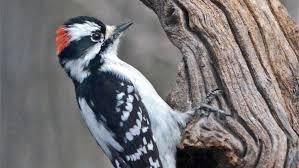 bird friendly native plants audubon bird friendly communities audubon great lakes