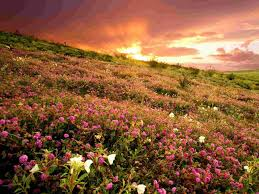 anza borrego state park at sunrise california wallpaper flowers
