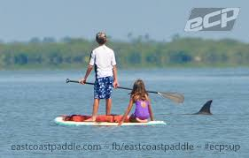 15 must see stand up paddle boarding pics close encounters ocean kind