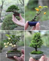 artistic use of gardening techniques bonsai miniature tree home