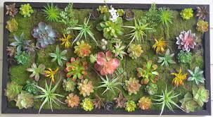 Vertical Wall Garden Plants by Make Your Own Wall Garden Diy Youtube