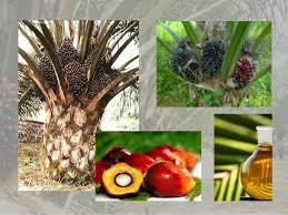 Minyak Kelapa Sawit Terkini menganalisis minyak kelapa sawit dan kepentingannya terhadap pembangu