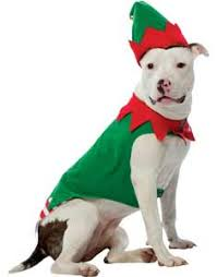 Halloween Costumes Dogs Cutest Puppy Costumes 2011 Buy Funny Dog Costumes Cute Puppy Costumes Guaranteed