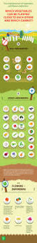 Beginner Vegetable Garden Layout by 25 Best Edible Garden Ideas On Pinterest Plants By Post