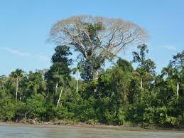 Above The Canopy by Amazon Rainforest Manu Biosphere Reserve Finnandbensworldtour