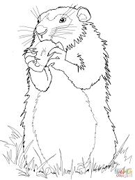 groundhog coloring paginone biz