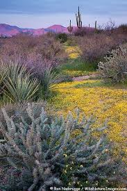 Apache Junction Flowers - 574 best cactus images on pinterest landscapes nature and