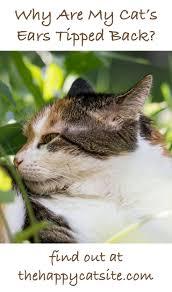 61 best cat behavior images on pinterest cat site cat behavior