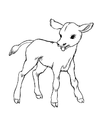 farm animal coloring pages little calf animal coloring pages of