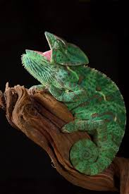 420 best beautiful reptiles and amphibians images on pinterest