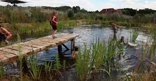 Natural Swimming Pool How To Build A Diy Natural Swimming Pool Video Treehugger