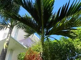 Poolanlagen Im Garten Jamaika Riu Clubhotel Riu Negril Strandclub Alles Inklusive Youtube